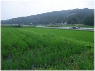 2010_0711II.jpg